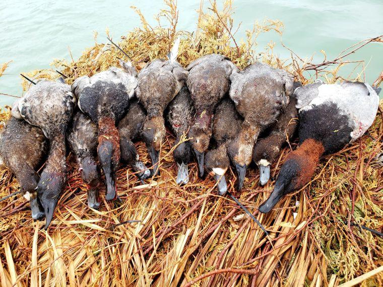 128402166 1185414481855415 965352880499760816 n 2 St. Clair Duck Hunts