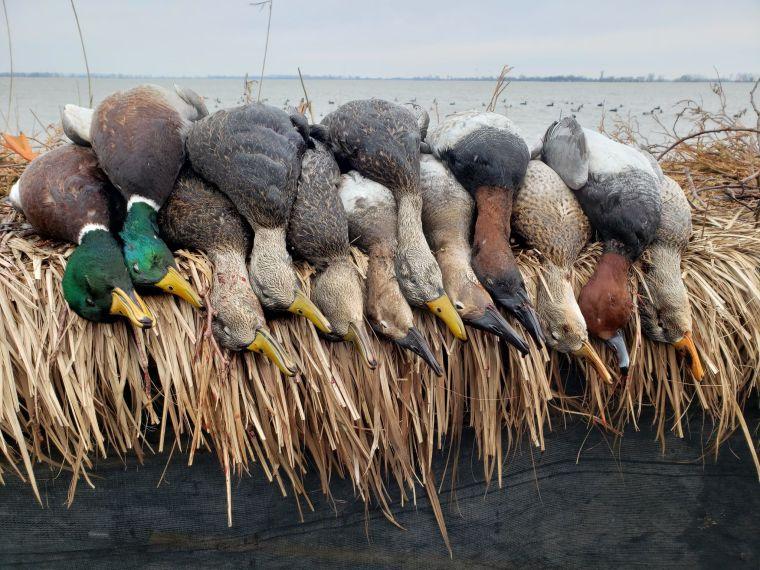 132290683 236528564500592 8475814241432482689 n 3 St. Clair Duck Hunts