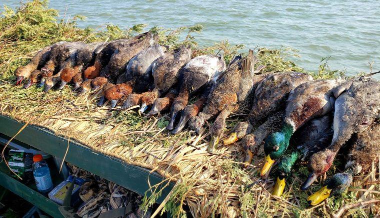 139372642 147570023689982 5102421448394025811 n 2 St. Clair Duck Hunts