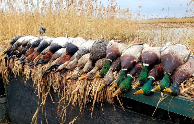 139500343 442675650436617 706941703310194647 n 2 St. Clair Duck Hunts