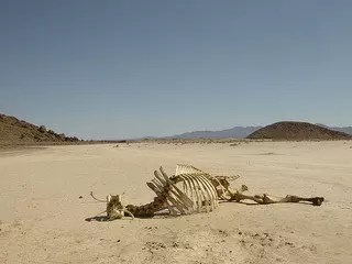 Dry Lake Bed with Cattle Skeleton