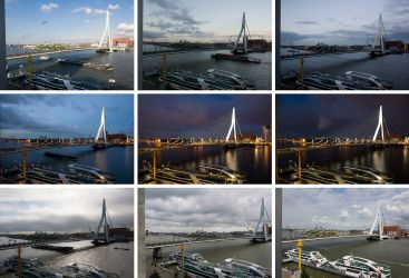 Port City Safari - Rotterdam