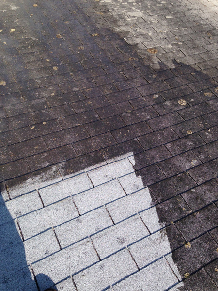Diy Tip From Pro How To Clean Mold And Moss Off A Roof