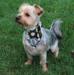 Steampunk dog bandana. Created by The Dinky Dog.