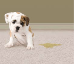 carpet cleaning pet stains