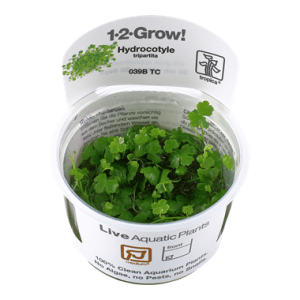 Tropica 1•2•Grow! Hydrocotyle tripartita