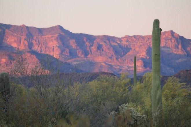 Organ Pipe Cactus Natl Monument