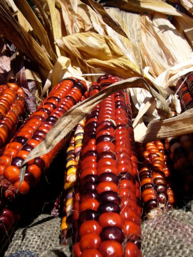 Painted Indian Corn