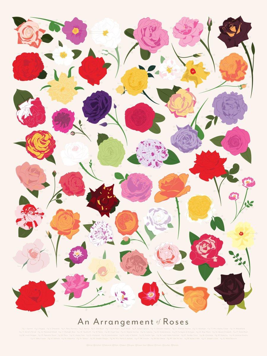 P-Roses_Zoom.jpg