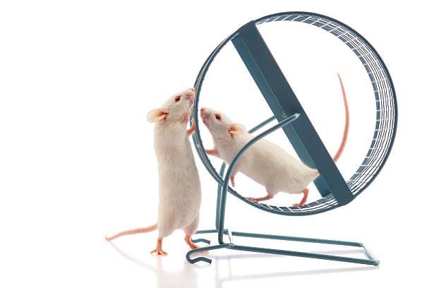 Mouse treadmill.jpg