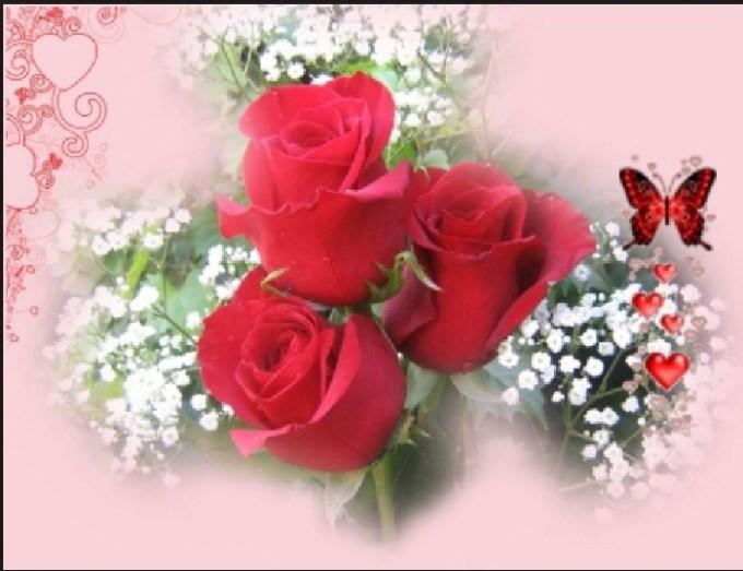 rose image hd love viewsitenew co