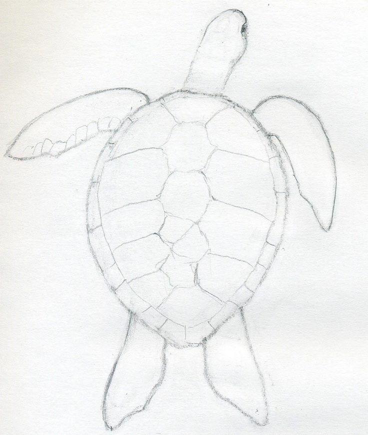 Easy Pencil Drawings Of Sea Animals Pencildrawing2019