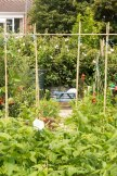 Allotment 3rd july 2014 lores-9354
