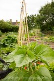 Allotment 3rd july 2014 lores-9381