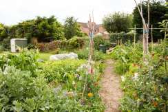 Allotment 3rd july 2014 lores-9390