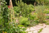 Allotment 3rd july 2014 lores-9394