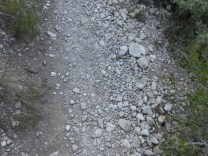 Most of the trail looked like this.
