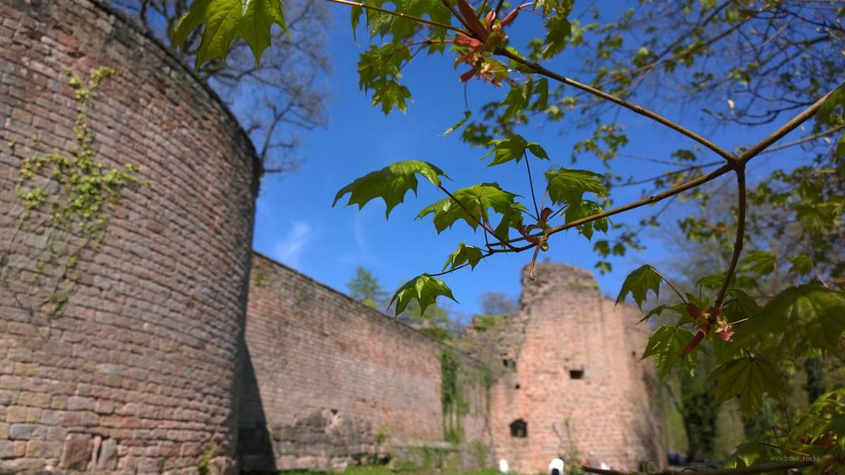 Burg Nanstein - und wie ich beinahe mein Bienchen verlor...