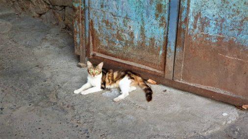Katze posiert für Foto. Katzen sind auch eitel...