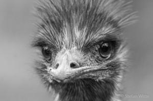 Emu s/w