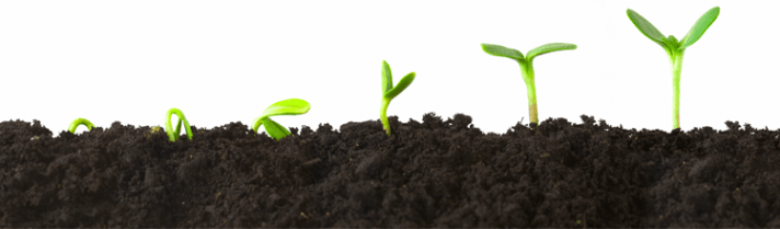 Blog-header_220_plants