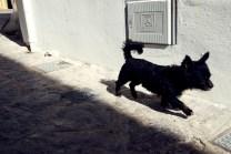 Black dog walking down an alleyway