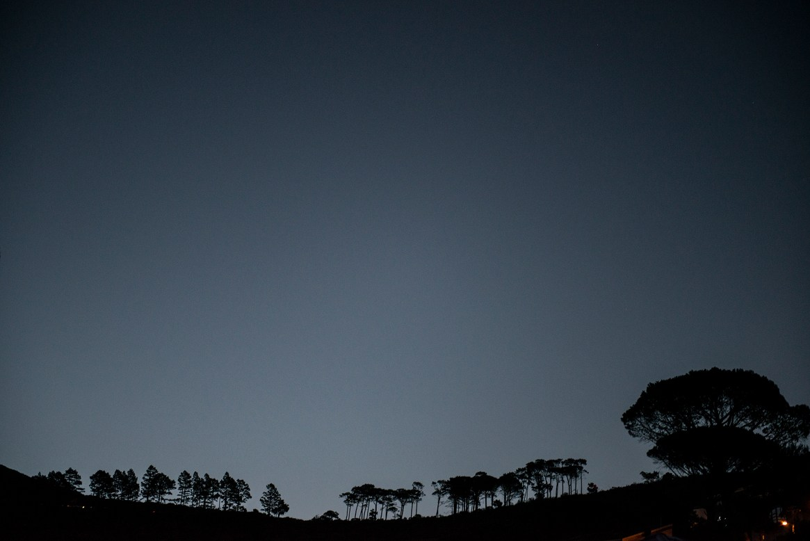 A row of trees on a hill at sunset in Tamboerskloof, Cape Town