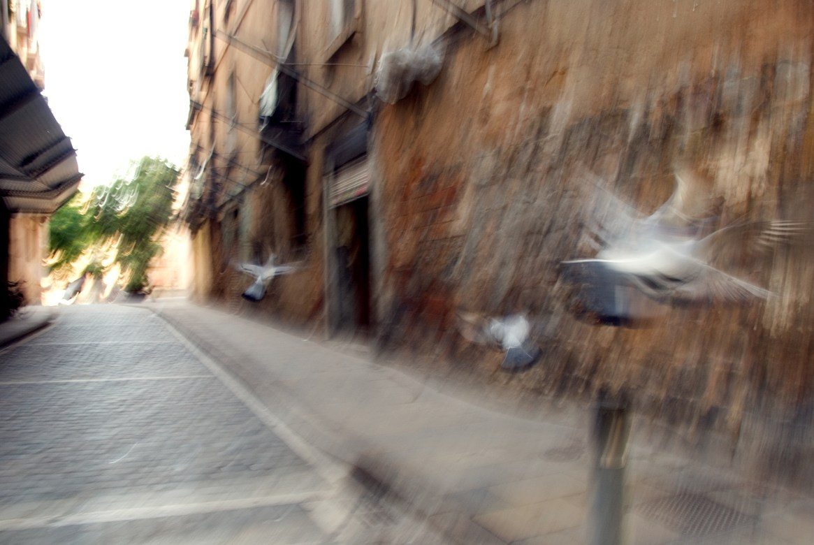 Blurry birds fluttering down a rustic old-town alleyway, Barri Gotic, Barcelona
