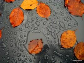 Raindrops on leafes