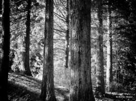 Tempting Walk Trees
