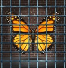 butterflycaged