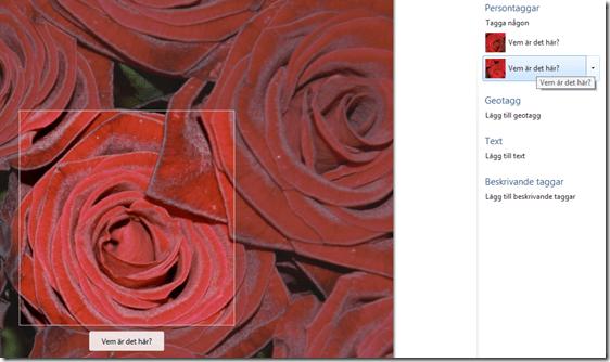 roseface