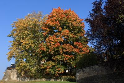 Laubfärbung im Schloßpark Pillnitz