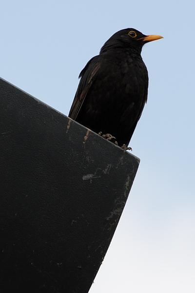 Ein Vögelchen hat mir gezwitschert ...