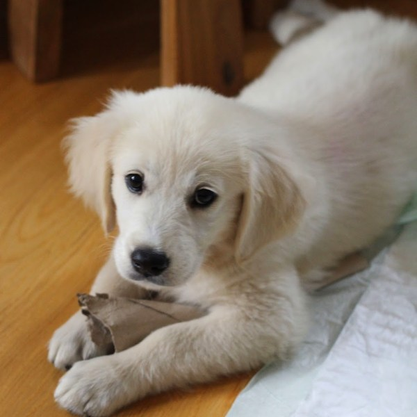 Life Lately: Say Hello to Bella