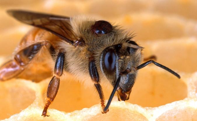 Pollinator health task force