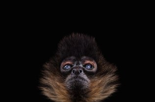 wildanimalportraits-0-0