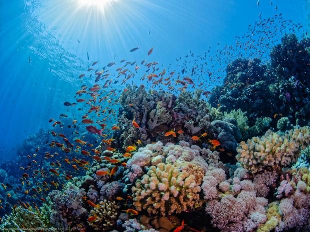 Underwater%20Sunshine