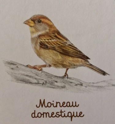 Mon cahier d'observation et d'activités Les oiseaux, Éditions Nathan