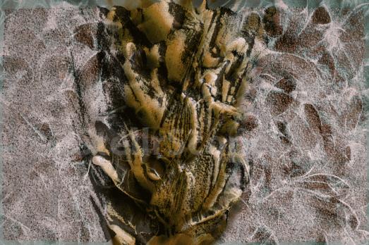 "Image, ""Wheat Pest' by Eleanor Gates-Stuart"
