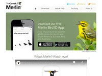 Merlin Bird ID