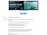 MOTE Marine Lab Sharks Alive: Livestream Shark Training (Mondays at 11:30 am EDT)