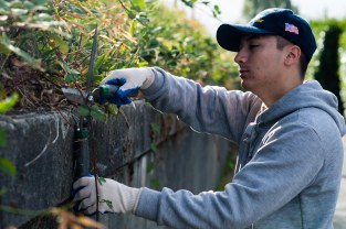 160924-N-XX566-064 BREMERTON, Washington (Sept. 24, 2016) Intelligence Specialist 3rd Class Joseph Hanley, from Mesa, Arizona, assigned to USS John C. Stennis (CVN 74) trims overgrown plants from a wall for a beautification project during a community service event. John C. Stennis is conducting a routine maintenance availability following a deployment to U.S. 7th and 3rd fleet areas of operation. (U.S. Navy photo by Mass Communication Specialist 3rd Class Andre T. Richard/ Released)