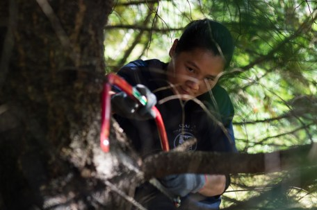 160924-N-XX566-214 BREMERTON, Washington (Sept. 24, 2016) Hospital Corpsman 1st Class Yan Yang, from San Francisco, assigned to USS John C. Stennis (CVN 74) removes a low hanging branch from a tree for a beautification project during a community service event. John C. Stennis is conducting a routine maintenance availability following a deployment to U.S. 7th and 3rd fleet areas of operation. (U.S. Navy photo by Mass Communication Specialist 3rd Class Andre T. Richard/ Released)