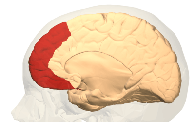 Know Your Brain: The Prefrontal Cortex