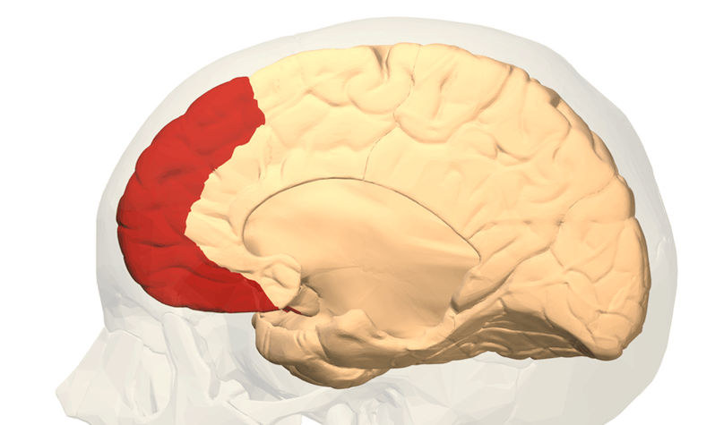 Know Your Brain: The Prefrontal Cortex