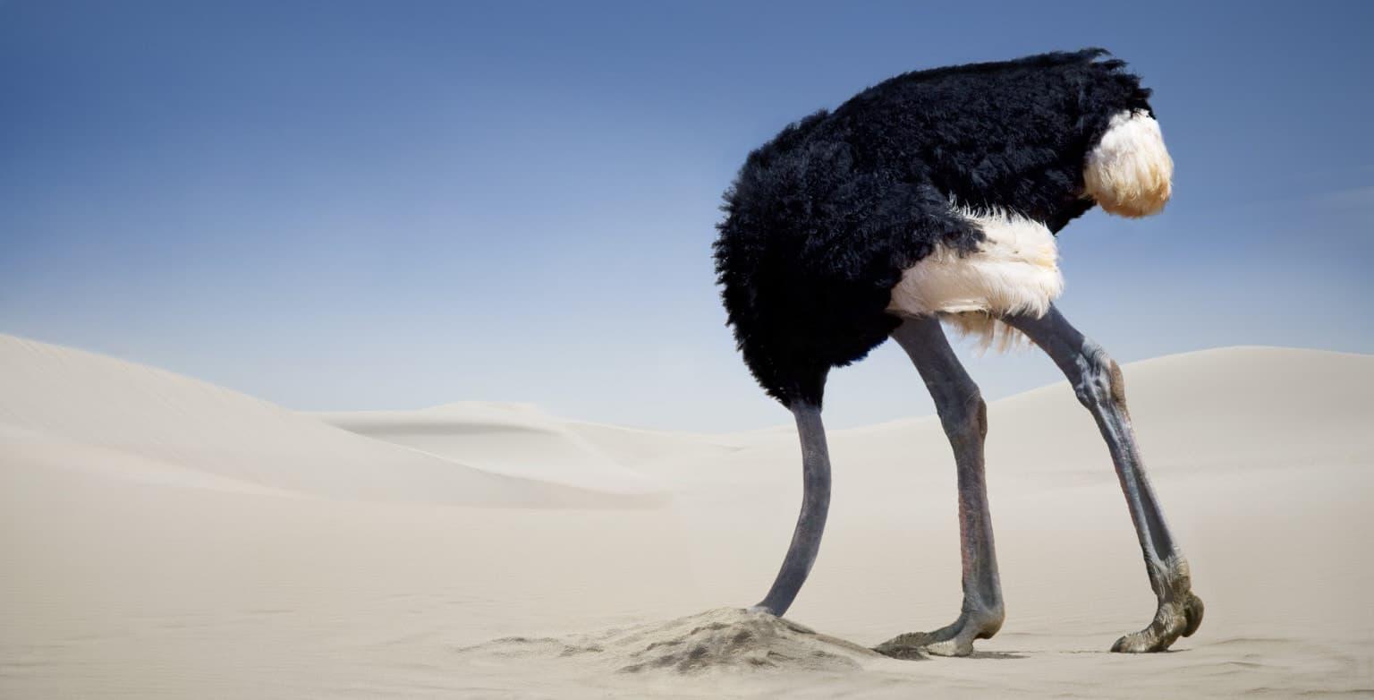 「ostrich hide head」的圖片搜尋結果
