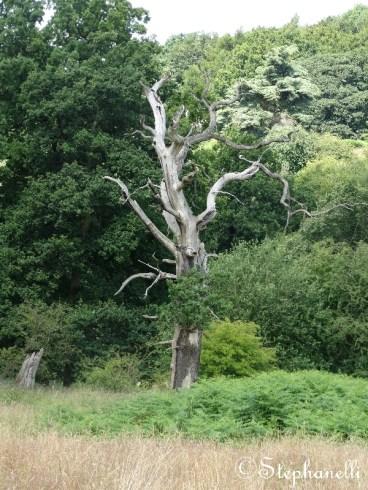 I really liked this tree!
