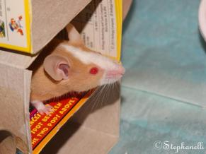 17th March 2016: My mummy gave me a new toy today. She'd made it especially for me. She's made a few things for me now. This is me peaking out of it. Its a tower of boxes with a turret at the top that I like to climb out of. I move too fast for mum to get a good picture yet!