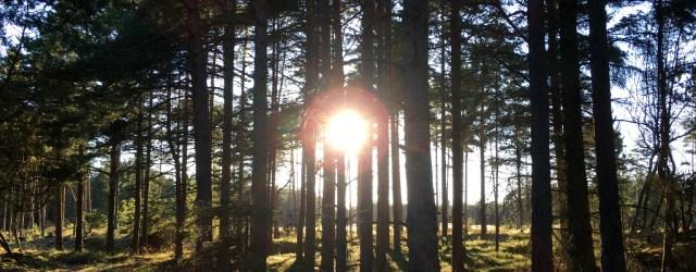 Naturen og hvordan den kan give dig ro på tankerne